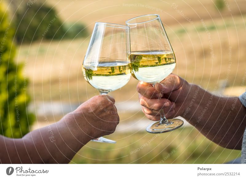 Weißwein in einem Garten mit Weingläsern Mittagessen Abendessen Getränk trinken Alkohol Lifestyle Reichtum Stil Freizeit & Hobby Sommer Feste & Feiern