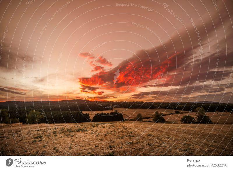 Erstaunlicher Sonnenuntergang über trockenen Ebenen mit Pinienbäumen schön Ferien & Urlaub & Reisen Sommer Garten Umwelt Natur Landschaft Himmel Horizont Herbst