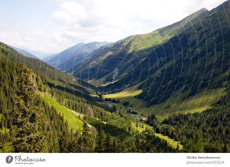 Grüne Lunge Himmel Natur grün schön Baum Pflanze Ferien & Urlaub & Reisen Sommer Wolken Wald Umwelt Berge u. Gebirge Landschaft Gras Feld Tourismus