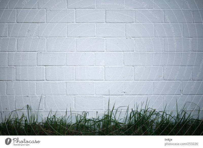 Meinungsfreiheit für alle! grün weiß Wand Architektur Gras Stein Gebäude Mauer Stimmung Linie Beginn Wachstum leer Streifen Rasen Bauwerk