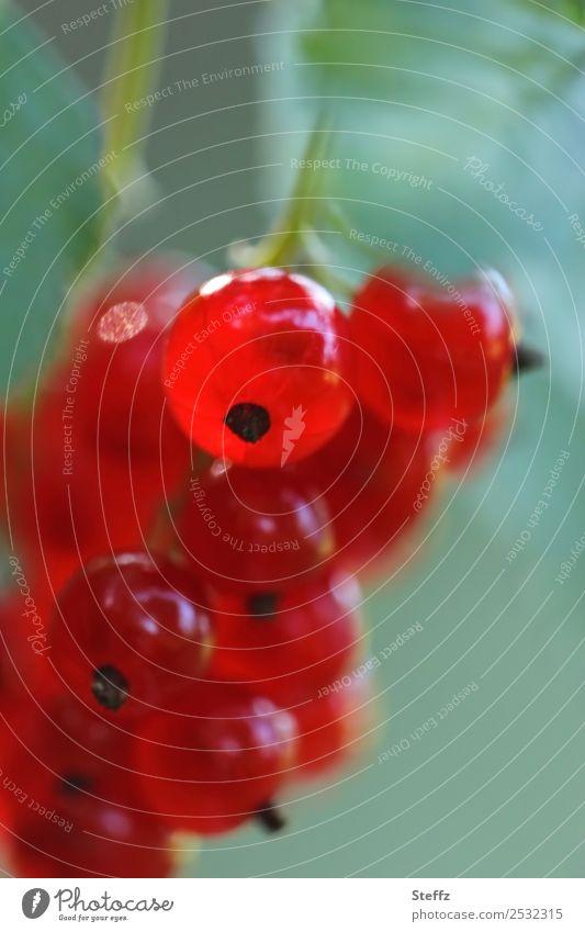 Frisch zum Dessert Natur Sommer schön grün rot Gesundheit Garten Frucht frisch glänzend lecker Bioprodukte Beeren Vegetarische Ernährung Vitamin