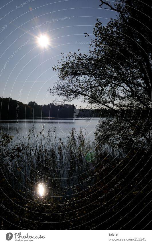 Lichtblick Ferien & Urlaub & Reisen Ferne Umwelt Natur Landschaft Pflanze Urelemente Luft Wasser Himmel Wolkenloser Himmel Sommer Herbst Schönes Wetter Baum