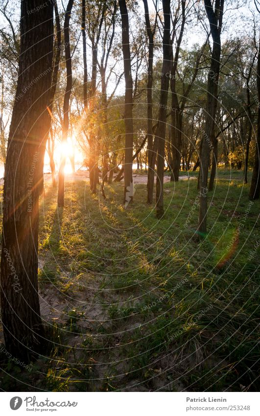 Finstere Zeiten Natur Baum Pflanze Sonne Sommer Ferien & Urlaub & Reisen Wald Umwelt Freiheit Landschaft Sand träumen Ausflug Abenteuer Wellness Urelemente