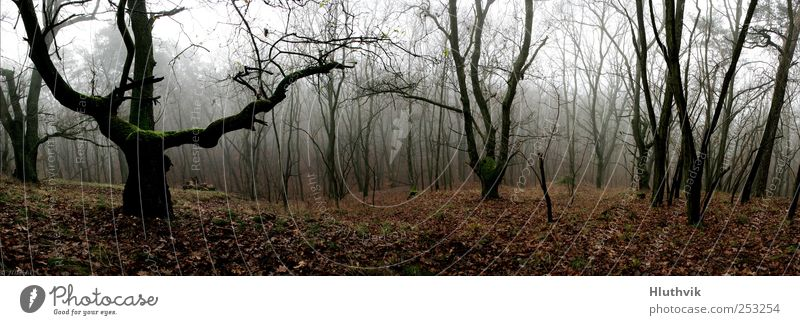 Der Blick ins Tal Umwelt Natur Landschaft Pflanze Herbst schlechtes Wetter Nebel Baum Moos Wald Hügel Moor Sumpf alt authentisch bedrohlich dunkel fantastisch