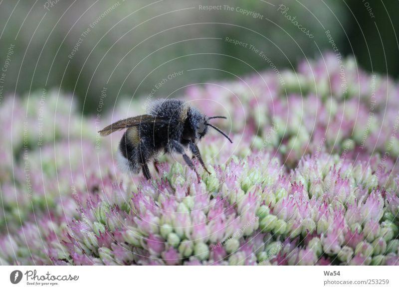 So eifrig Natur blau grün schön Pflanze Blume Tier schwarz Garten Blüte Stimmung Arbeit & Erwerbstätigkeit glänzend nass Energie Wassertropfen