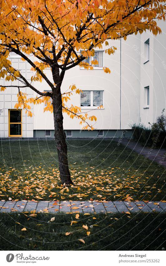 Bild meines Lebens Umwelt Landschaft Herbst Baum Sträucher Blatt Wiese Haus Wohnhaus Plattenbau Sanieren Fassade Fenster Tür Hof Wege & Pfade kalt trist Stadt