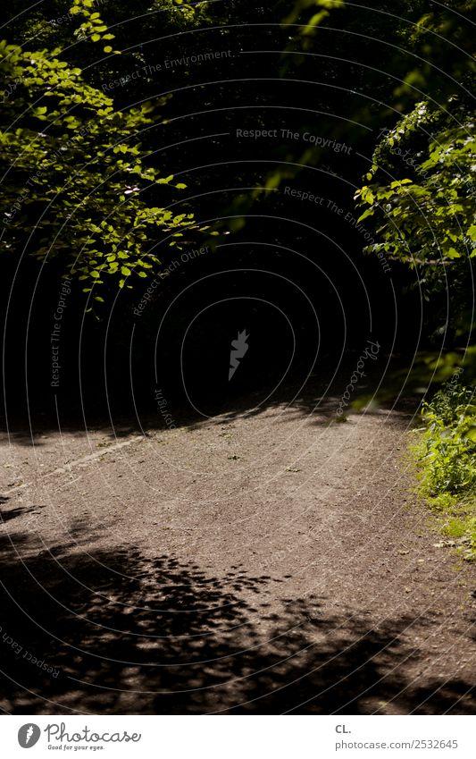 dunkler weg Umwelt Natur Urelemente Erde Sonnenlicht Sommer Klima Wetter Schönes Wetter Wärme Baum Sträucher Wald dunkel Zukunftsangst bedrohlich geheimnisvoll