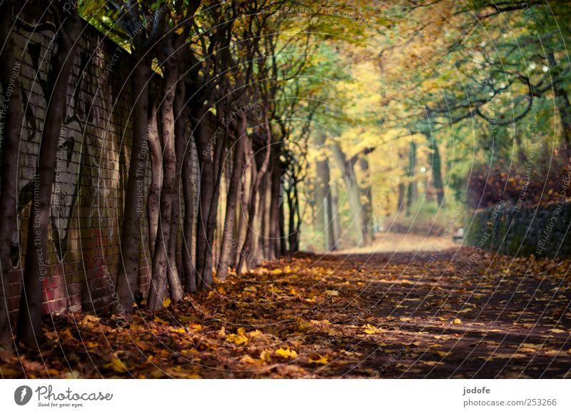 Der Weg Natur Baum Pflanze ruhig Einsamkeit gelb Herbst Umwelt Landschaft Wege & Pfade Mauer gold Herbstlaub friedlich herbstlich Herbstfärbung