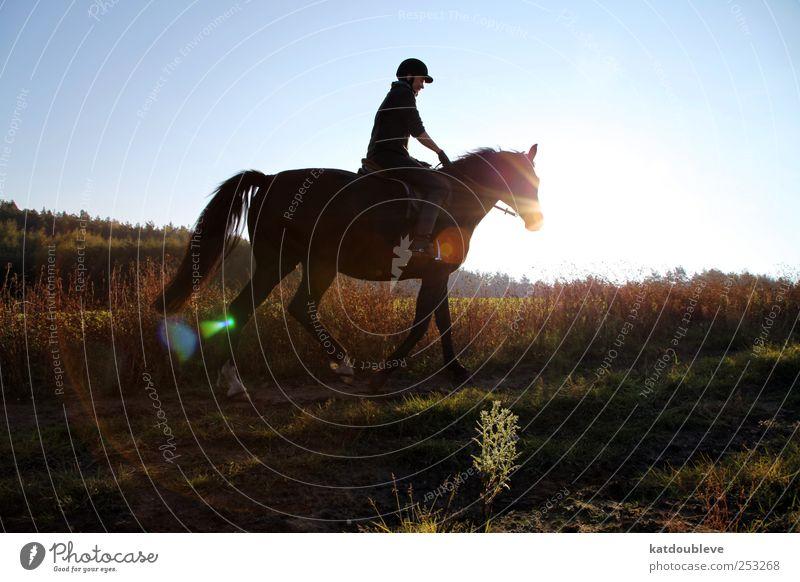 le cheval Himmel Natur alt Pflanze Tier Wald Landschaft Umwelt Sport Herbst Gras Freiheit springen gehen Erde laufen