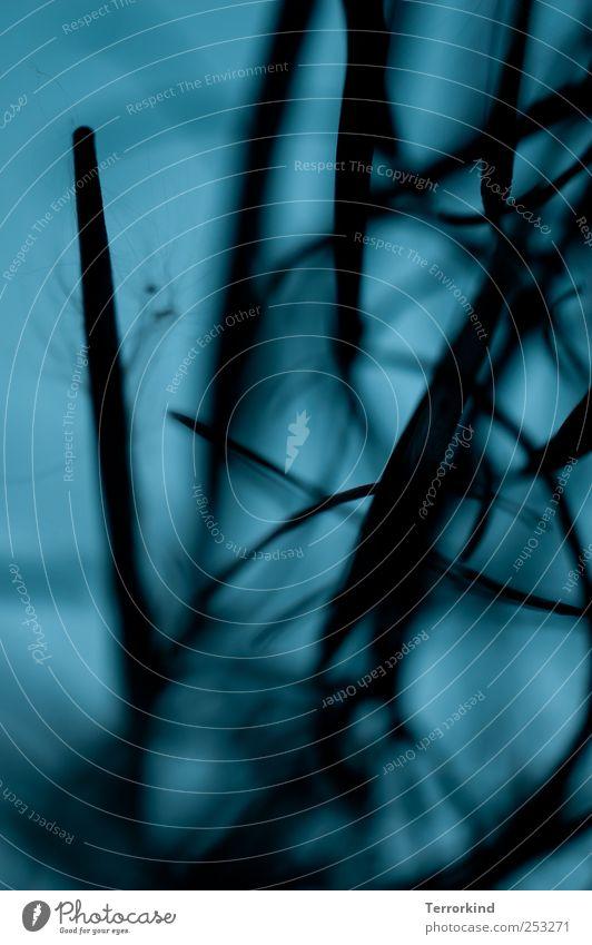 Chamansülz 2011 | . blau grün Pflanze Blatt schwarz dunkel Gras geheimnisvoll tief türkis verstecken durcheinander Spirale unheimlich Wurzel Windung