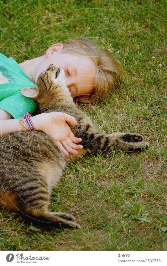 Best Friends: Kind mit Kater. Häusliches Leben Garten Mensch maskulin Junge Kindheit 1 8-13 Jahre Sommer Gras Wiese Tier Haustier Katze Tigerkatze Hauskatze