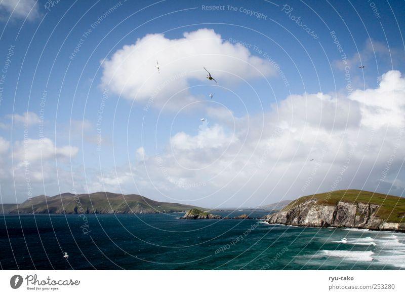 dingle. Natur Wasser Himmel Wolken Herbst Hügel Felsen Berge u. Gebirge Schlucht Wellen Küste Meer Insel Erholung träumen ästhetisch blau braun grün weiß