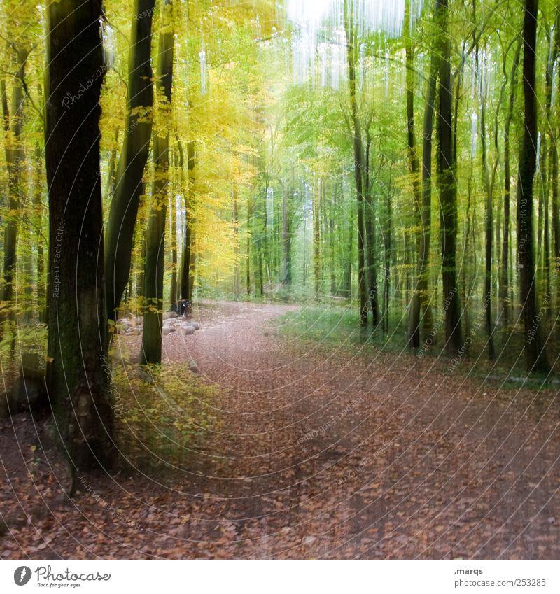 Spaziergang Natur Wald Erholung Farbe Herbst Wege & Pfade Ausflug Fußweg genießen