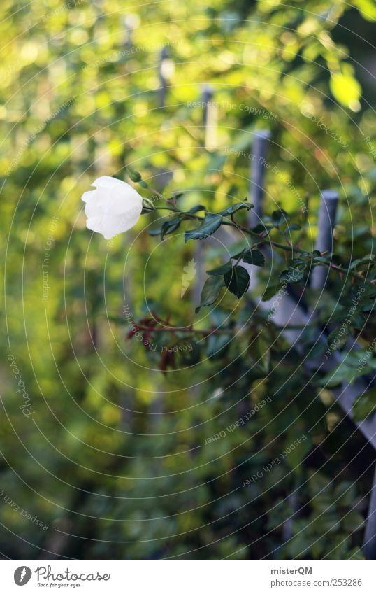 Wegrand. Umwelt Natur Landschaft Pflanze ästhetisch grün Grünpflanze Rose Hecke Ranke Zaun schön dezent Friedhof Frieden Dorn Garten Park Farbfoto