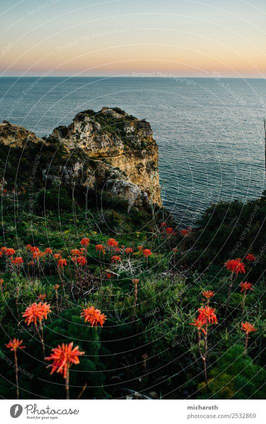 Sonnenuntergang über dem Meer, Blumen im Vordergrund Natur Landschaft Erde Wasser Himmel Sonnenaufgang Schönes Wetter Gras Felsen frei schön blau grün orange