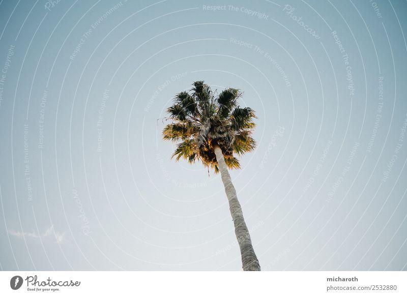Palme Ferien & Urlaub & Reisen Ausflug Ferne Freiheit Sommer Sommerurlaub Sonne Meer Natur Wolkenloser Himmel Schönes Wetter Wärme Baum exotisch Strand