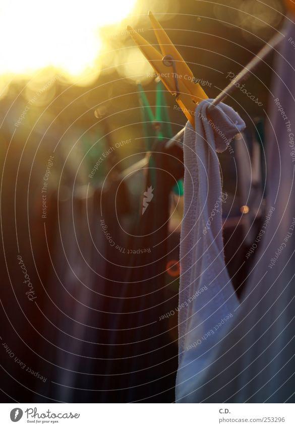 Wäsche im Abendsonnenschein... Garten Schönes Wetter Bekleidung Hemd hängen natürlich Klammer Wäscheleine Wäscheklammer Reflexion & Spiegelung Farbfoto