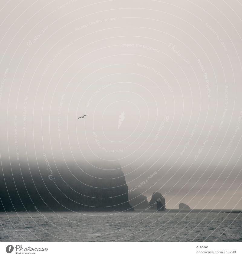 S I L E N C E Natur Wasser Meer Wolken ruhig Tier Erholung Berge u. Gebirge Landschaft Küste Regen Wetter Wellen Vogel Felsen Nebel