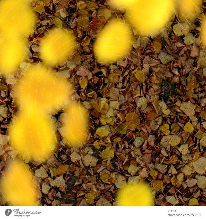 Vogelperspektive Natur Landschaft Pflanze Blatt Wildpflanze braun gelb Herbst Herbstfärbung Laubbaum Linde Lindenblatt viele Herbstlaub Farbfoto Außenaufnahme
