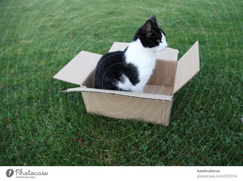 le chat dans carton Natur grün schwarz Wiese kaufen Güterverkehr & Logistik Kasten verkaufen beweglich Paket Verpackung Tierliebe uneinig Opferbereitschaft