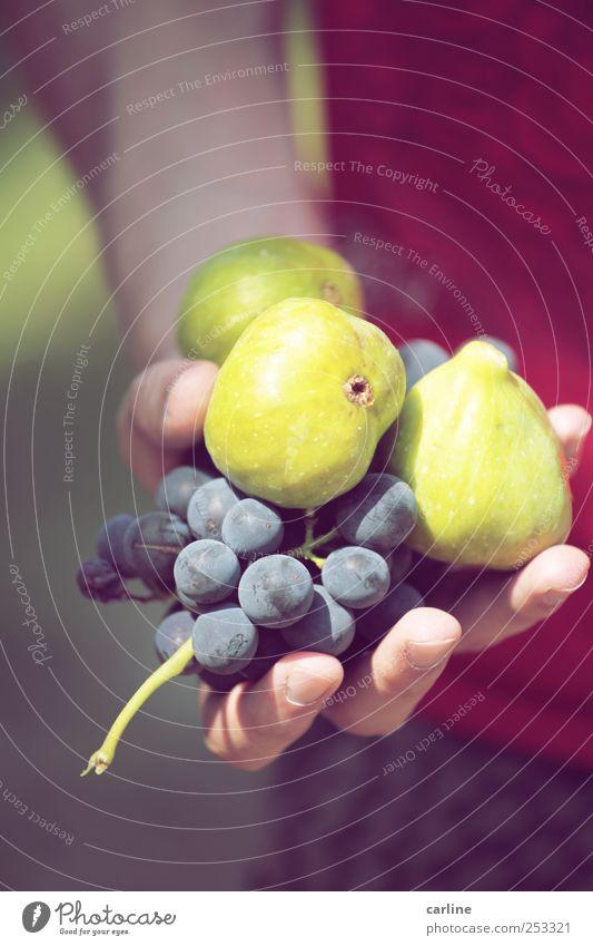 Freche frische Früchtchen Lebensmittel Frucht Ernährung exotisch Feige Weintrauben Ernte Aussaat Gesundheit biologisch ökologisch grün rot Hand Italien Natur