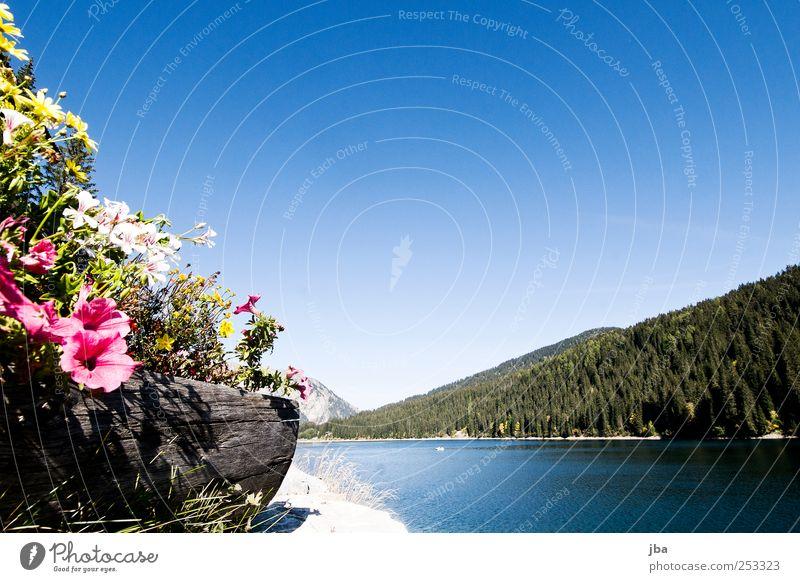 Blumen mit Seesicht Himmel Natur Wasser Pflanze Sonne Sommer ruhig Wald Erholung Herbst Berge u. Gebirge Landschaft Holz Luft