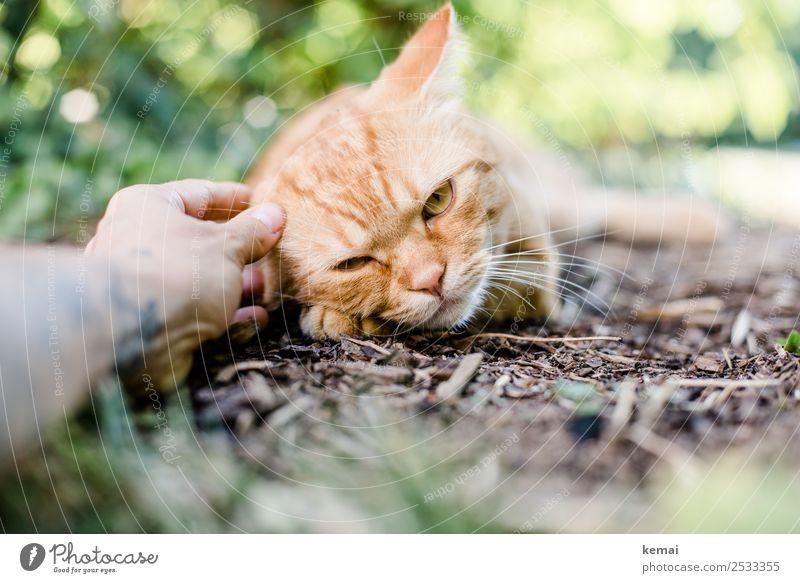 Freund Katze Mensch Sommer Pflanze Hand Erholung Tier ruhig Lifestyle Wärme Leben Garten Zusammensein Freundschaft Zufriedenheit Freizeit & Hobby