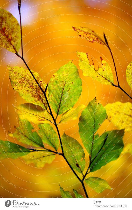 herbstlich Natur grün schön Baum Pflanze Blatt ruhig gelb Farbe Leben Herbst Umwelt gold frisch Gelassenheit Schönes Wetter