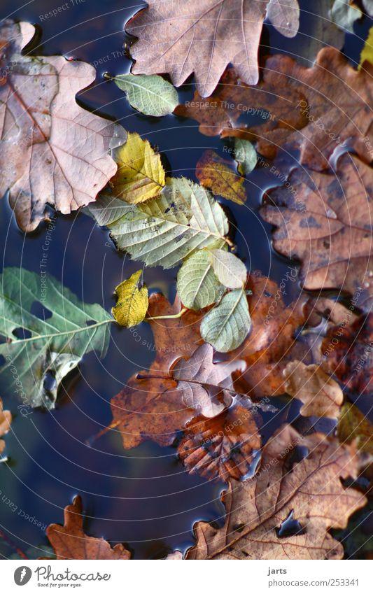 blätter Natur Wasser Pflanze Blatt ruhig Farbe Herbst frisch natürlich Gelassenheit Schönes Wetter