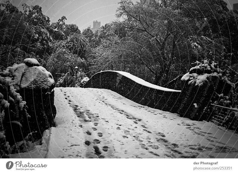 Winterlicher Central Park Himmel Natur Baum Pflanze kalt dunkel Schnee Umwelt Traurigkeit Klima Brücke Bauwerk Fußspur schlechtes Wetter