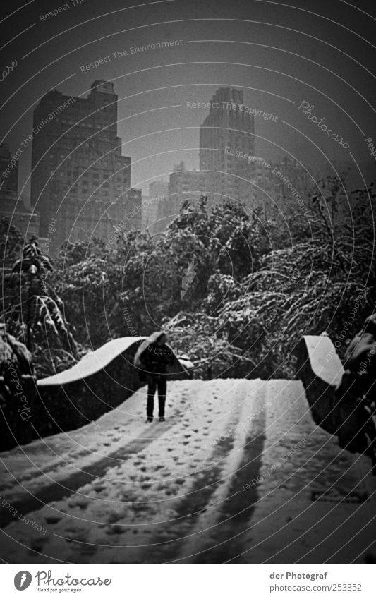Cold & Windy City Mensch maskulin 1 Umwelt Natur Pflanze Klima Wetter schlechtes Wetter Nebel Regen Schnee Baum Hauptstadt Stadtzentrum Haus Hochhaus Brücke