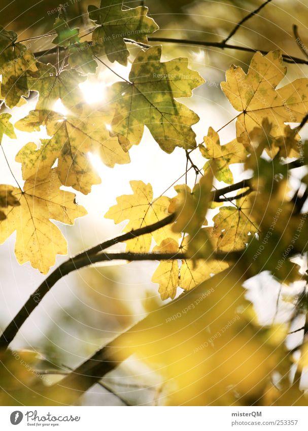 Golden Leaves. Natur schön Pflanze ruhig Einsamkeit gelb Herbst Umwelt Landschaft Beleuchtung ästhetisch Hoffnung Seeufer Schönes Wetter Herbstlaub Klimawandel