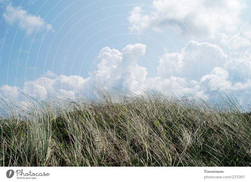 Gut im Sommer und im Herbst! Himmel Natur blau Pflanze Ferien & Urlaub & Reisen Wolken ruhig Umwelt Landschaft Gefühle Gras Küste Zufriedenheit ästhetisch