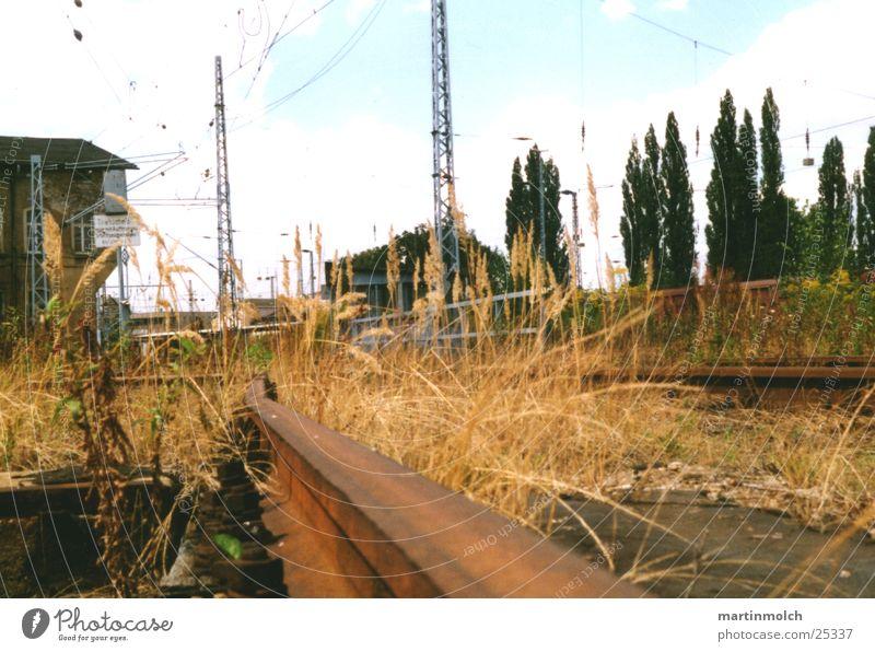 Industrial alt Baum Pflanze Einsamkeit Gras Gebäude Metall Beton Eisenbahn Industrie Elektrizität kaputt Gleise Bahnhof DDR Strommast
