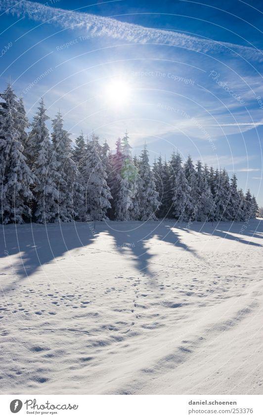 Schwarzwaldwinterwerbung Himmel Natur blau weiß Baum Ferien & Urlaub & Reisen Sonne Winter Wald Umwelt Landschaft Schnee Berge u. Gebirge Eis wandern Ausflug