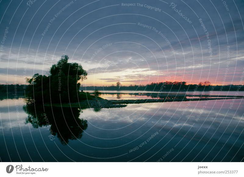 Abend der Stille Natur Himmel Wolken Sonnenaufgang Sonnenuntergang Sonnenlicht Sommer Schönes Wetter Baum Seeufer Flussufer blau rot schwarz Romantik ruhig