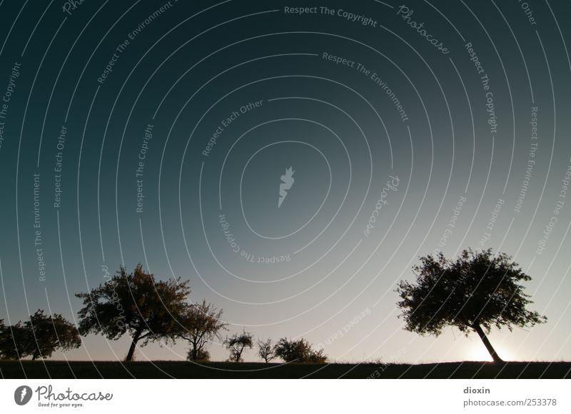 [Chamansülz2011] Silhouettes Himmel Natur Baum Pflanze ruhig Umwelt Landschaft Feld Wachstum Klima Sträucher Gelassenheit Schönes Wetter Wolkenloser Himmel