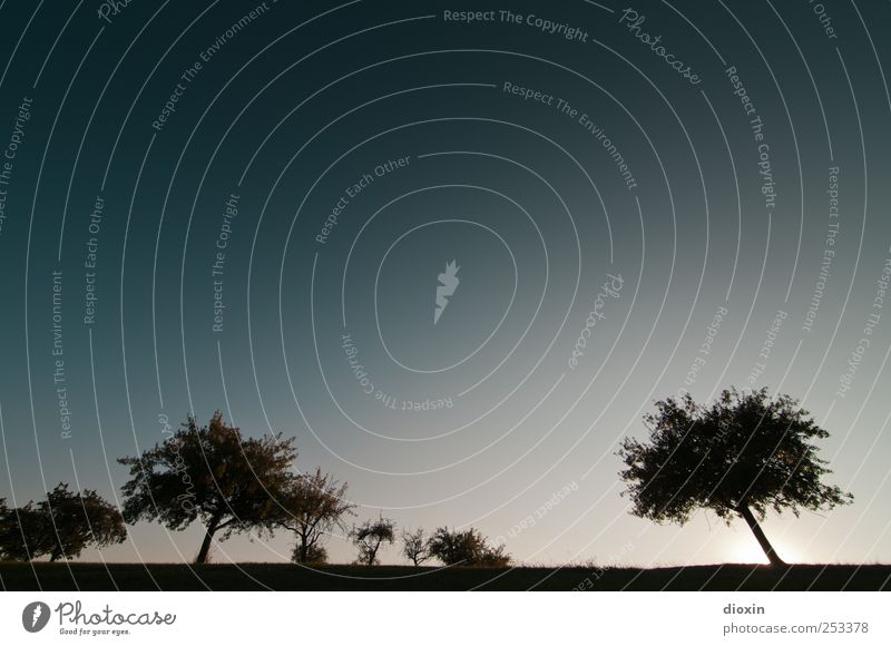 [Chamansülz2011] Silhouettes Umwelt Natur Landschaft Pflanze Himmel Wolkenloser Himmel Sonnenlicht Klima Schönes Wetter Baum Sträucher Feld Wachstum