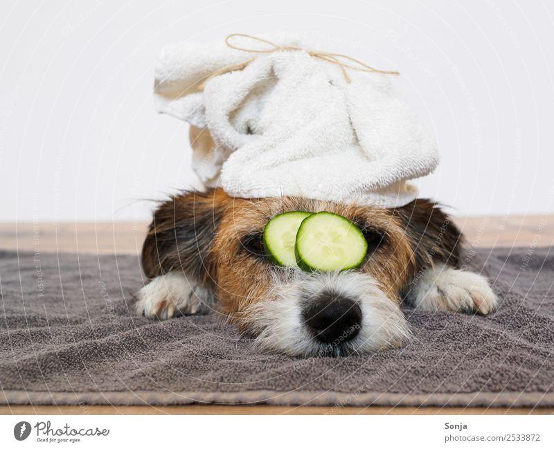 Hund, Haustier, Tier, Wellness schön Erholung ruhig Lifestyle lustig Gesundheitswesen braun Zufriedenheit genießen Sauberkeit Wohlgefühl geduldig