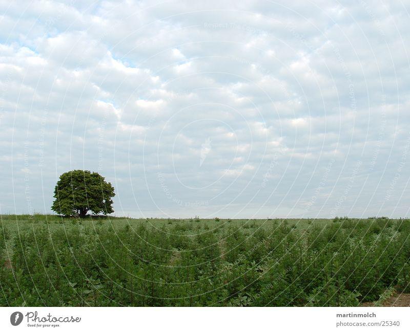 Feld mit Baum Himmel grün Wolken Wiese