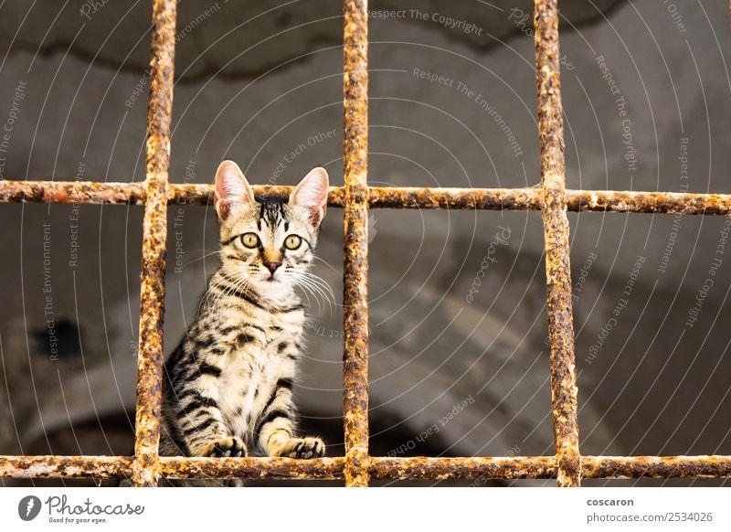 Kleine Katze hinter Metallgittern. Streunende Katze schön Gesicht Haus Natur Tier Pelzmantel Haustier niedlich braun grün rot weiß Traurigkeit reizvoll