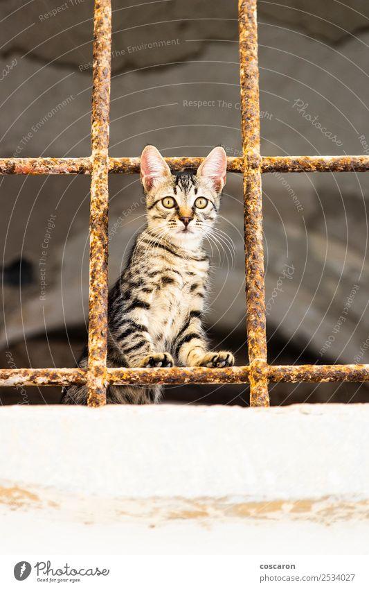 Kleine Katze hinter Metallgittern. Streunende Katze schön Gesicht Haus Natur Tier Pelzmantel Haustier 1 niedlich braun grün rot weiß Gefühle Tierliebe Neugier