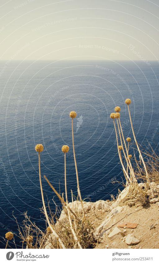 dumm rumstehen Himmel Natur Wasser blau Pflanze Blume Sommer Meer Umwelt Landschaft Küste Stein Erde Horizont Felsen Insel