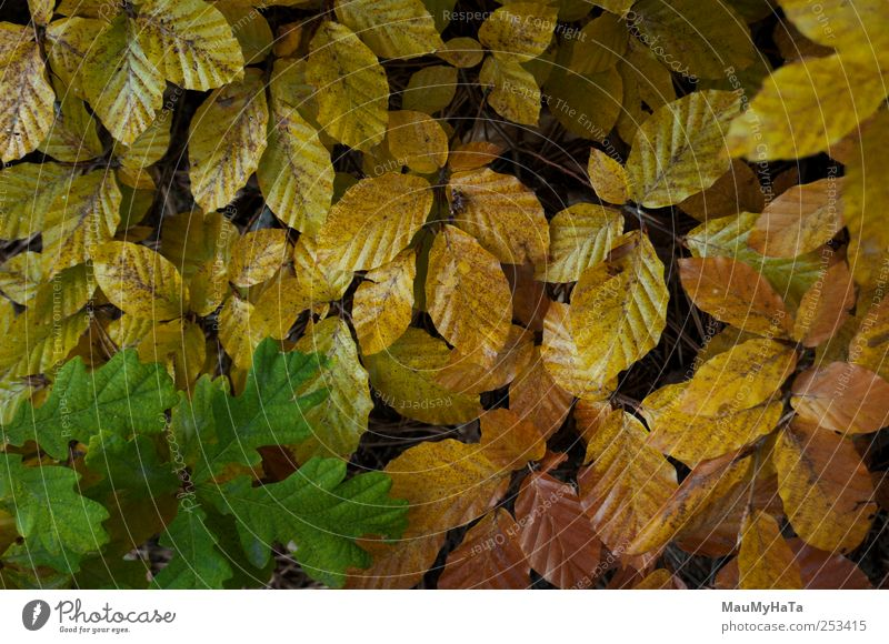Natur Baum Pflanze Blatt Erholung Berge u. Gebirge Herbst Stil Park Wetter Energie Unendlichkeit chaotisch Teamwork Wildpflanze