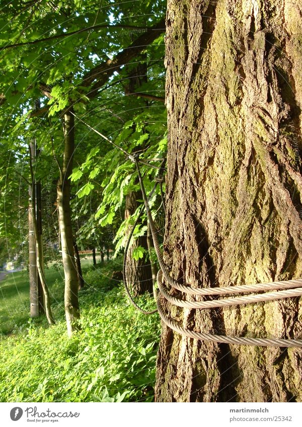Halt mich Baum grün Wald Seil Baumstamm Draht