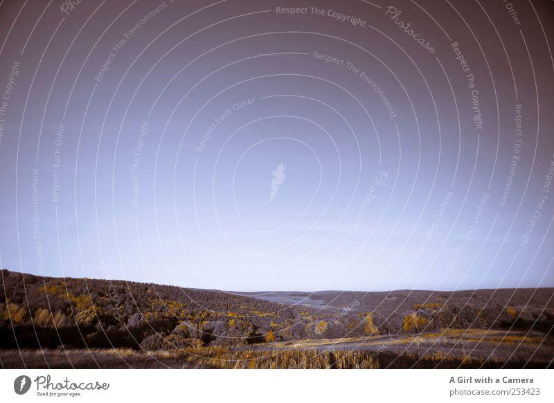 reduziert .... Umwelt Natur Landschaft Pflanze Himmel Wolkenloser Himmel Herbst Klima Schönes Wetter Baum Feld Wald Hügel außergewöhnlich gigantisch groß