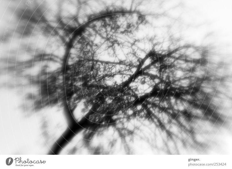 Es gibt kein Entrinnen. Umwelt Natur Pflanze Himmel Sommer Baum grau schwarz weiß Ast Apfel Leben verästelt Vernetzung Baumstamm stark Blatt diffus Irritation