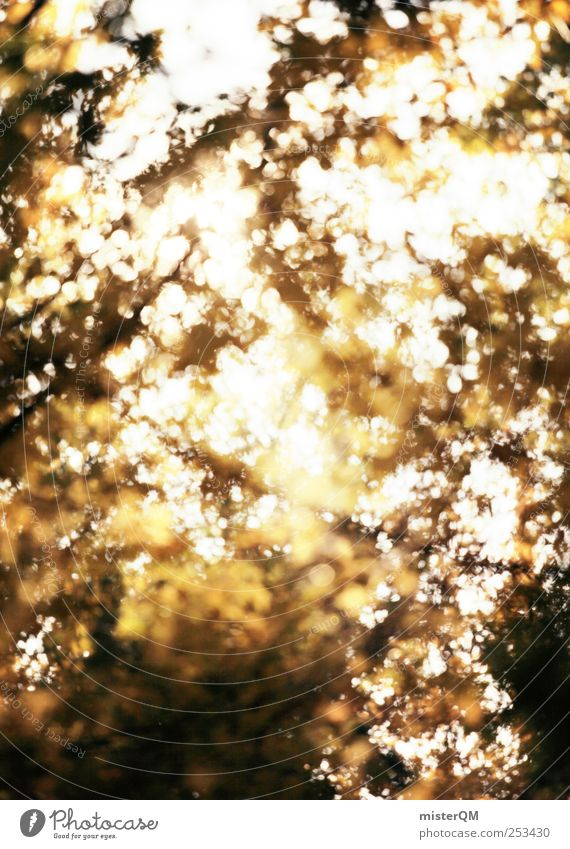 herbstzeitlos. Kunst Umwelt Natur Landschaft Pflanze ästhetisch Muster bizarr Surrealismus Baumkrone Herbst Herbstlaub herbstlich Herbstbeginn Herbstfärbung