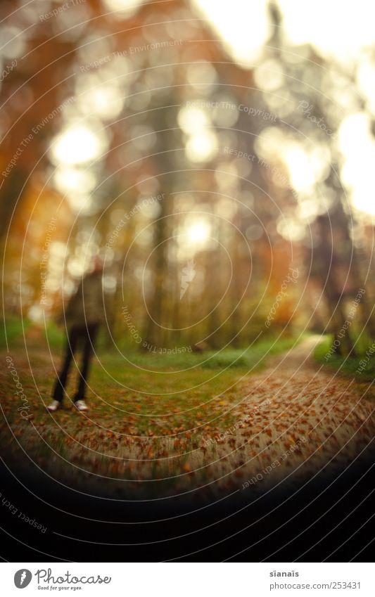 traumpfad Leben maskulin Mann Erwachsene 1 Mensch Natur Herbst Wald Wege & Pfade gehen Surrealismus Spaziergang Spazierweg gegen kommen Herbstlaub herbstlich