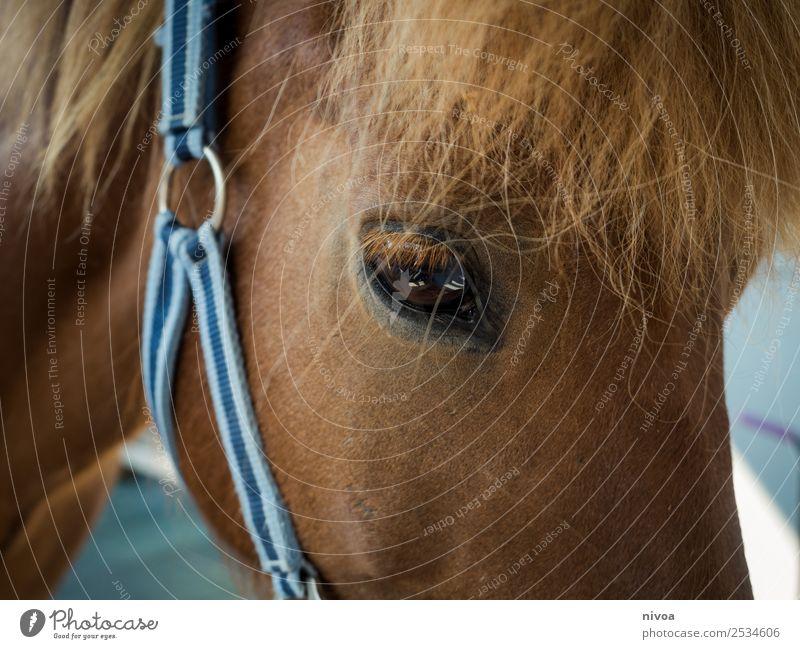 Isländer Pferd im Profil Tier Freude Sport Glück Zusammensein Ausflug Freizeit & Hobby frisch stehen Fröhlichkeit Lebensfreude beobachten Freundlichkeit
